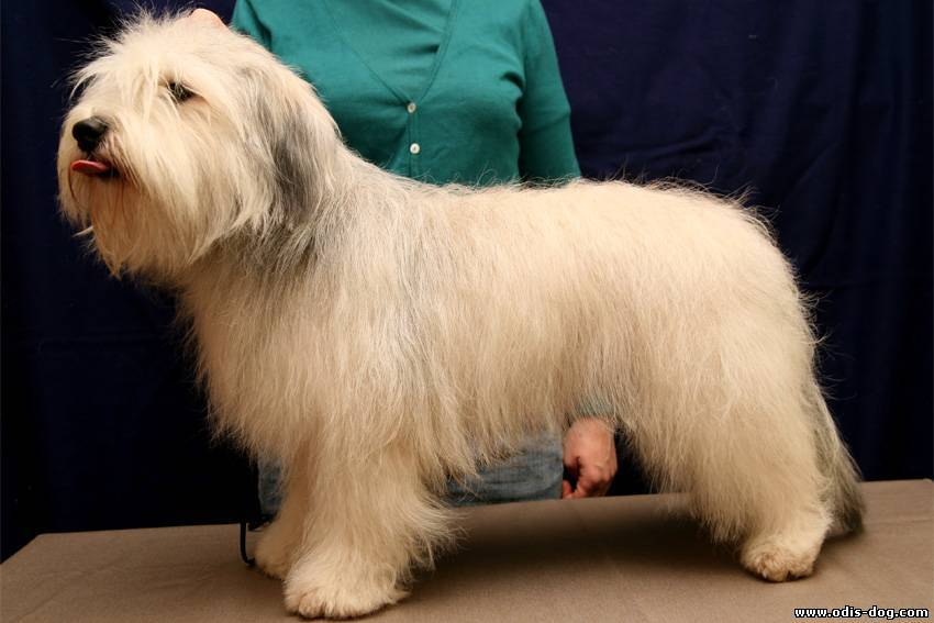 Одис: одесская домашняя идеальная собака