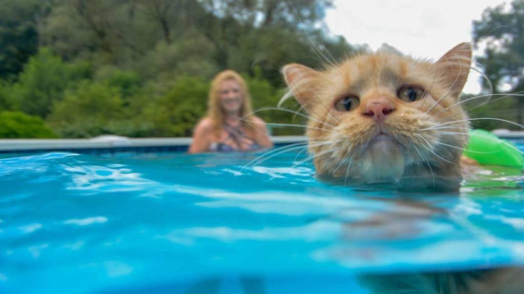 Топ-10 пород кошек, любящих воду