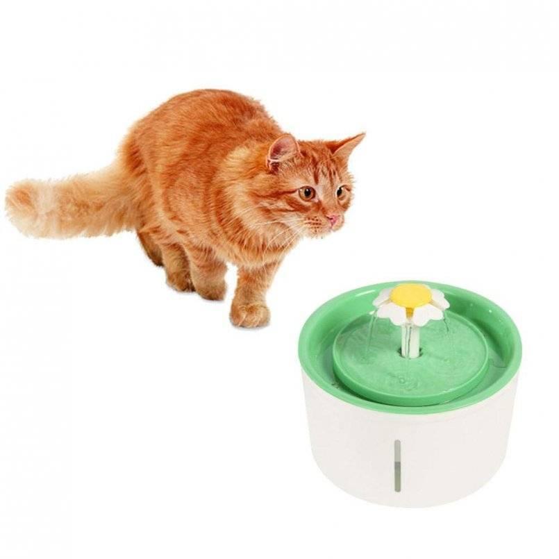 Автопоилка для кошки выбираем лучшую - oozoo.ru
