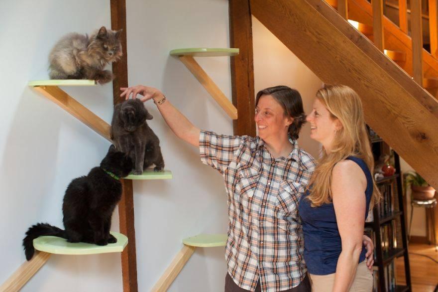 12 вещей, которые должны быть в доме каждого владельца кошек | pet4me.ru
