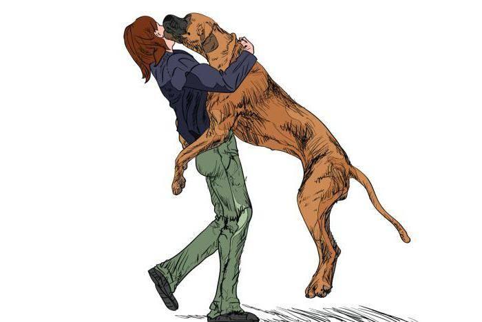 Основы дрессировки: как отучить собаку прыгать на хозяина
