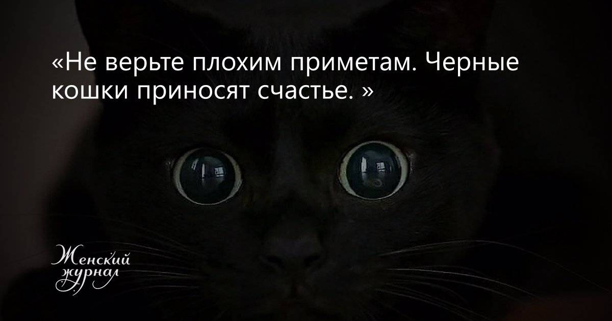 Кошка-талисман: какую кошку завести для привлечения денег, удачи и любви