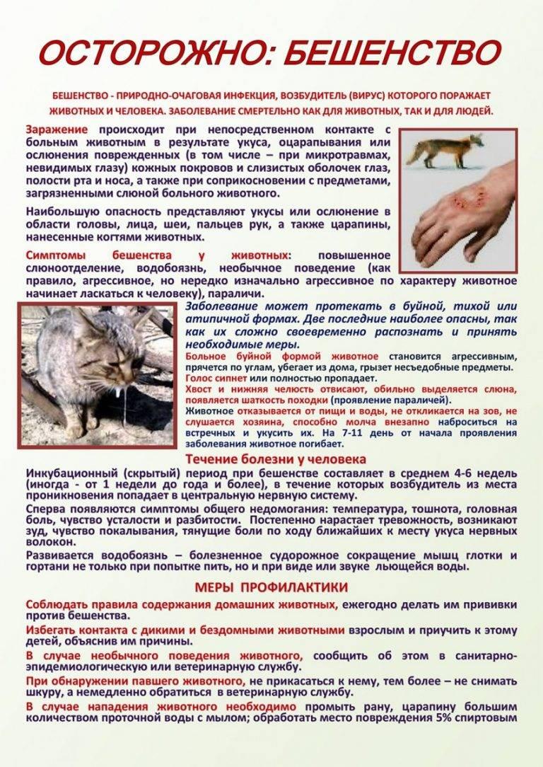 Отравление изониазидом человека, собаки, кошки: симптомы, лечение | компетентно о здоровье на ilive