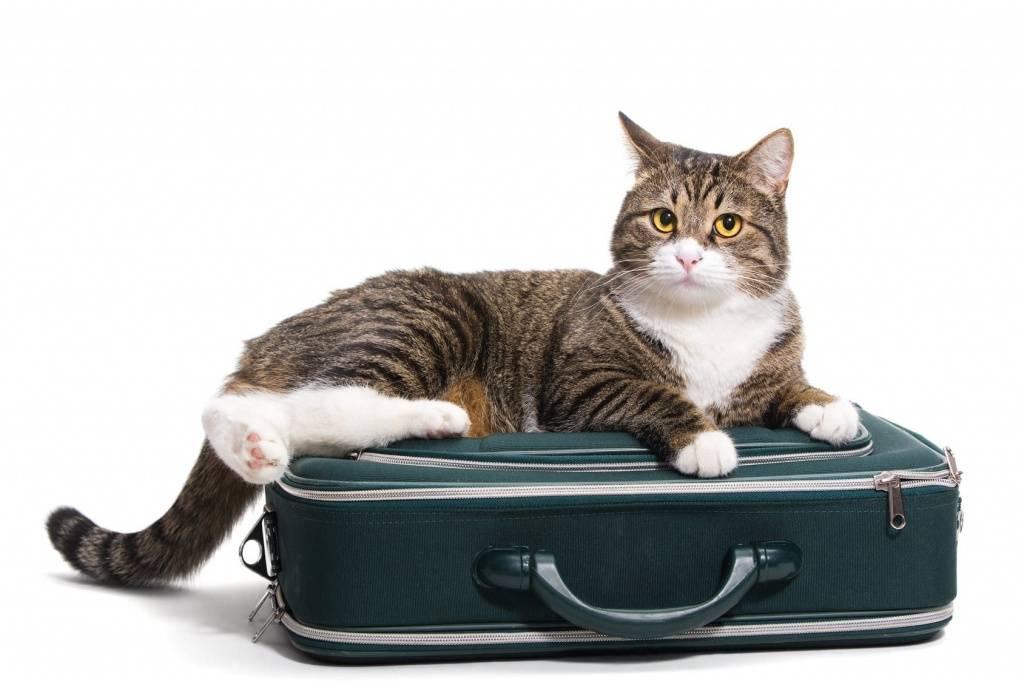 Как приучить кошку к новому дому. советы от эксперта