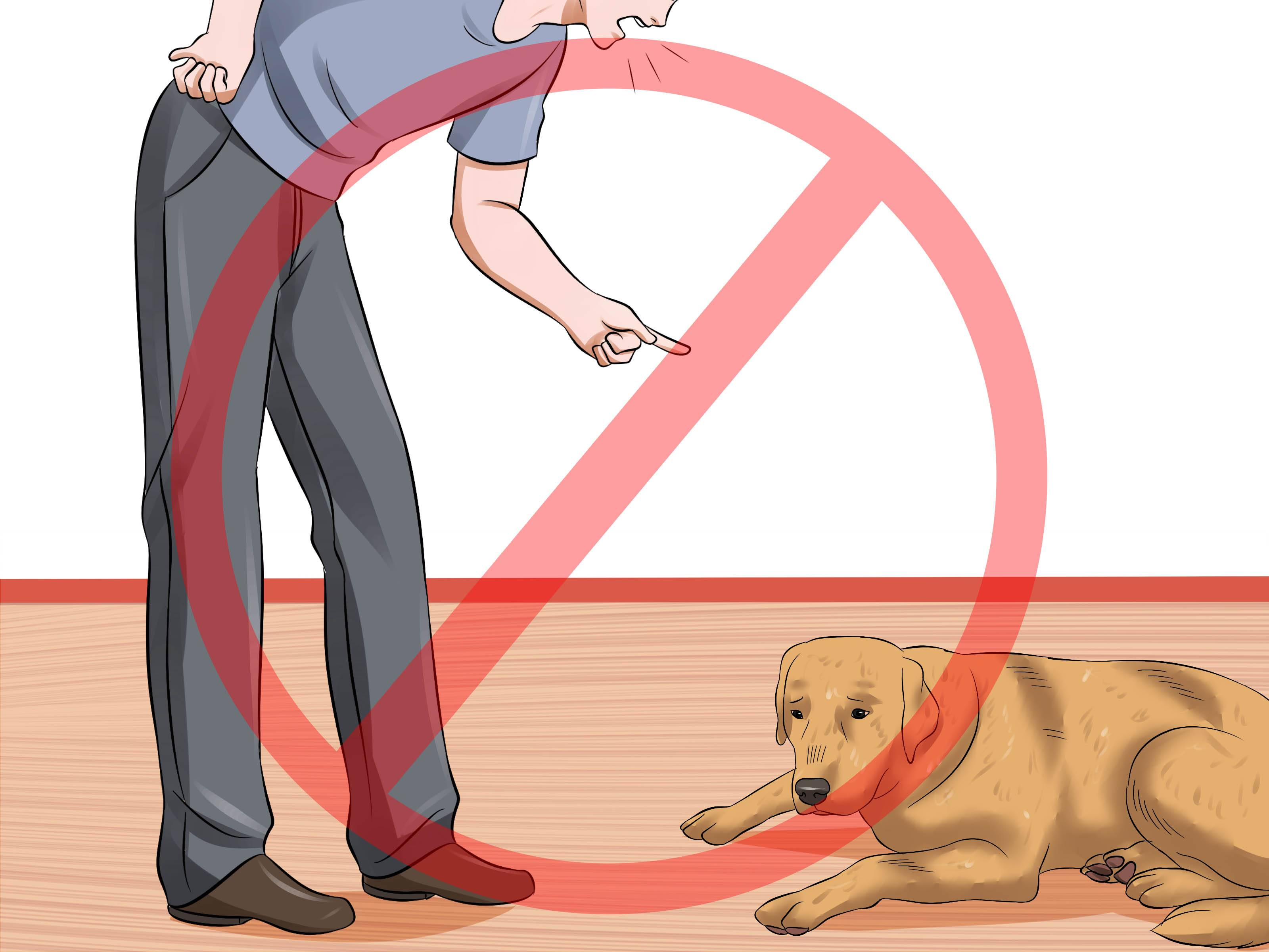 Как научить собаку команде фас: методы обучения в домашних условиях