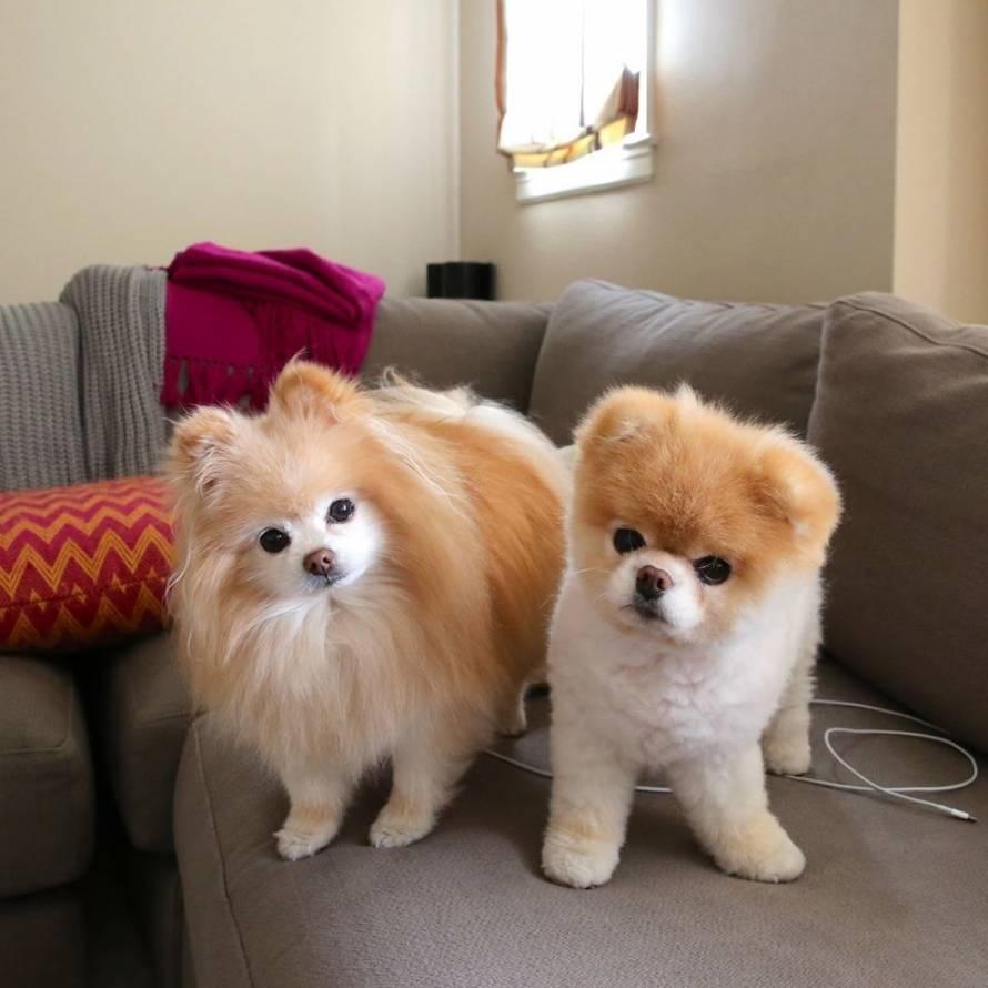 Самые милые породы собак их фото и описание | milota.online