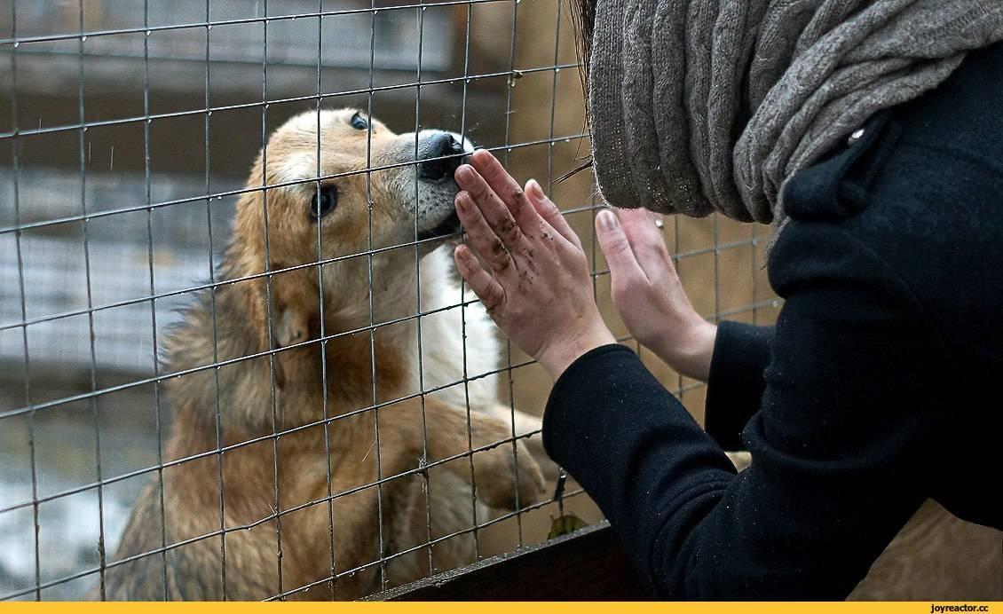 Собаки и щенки в дар, породистые собаки бесплатно в добрые руки