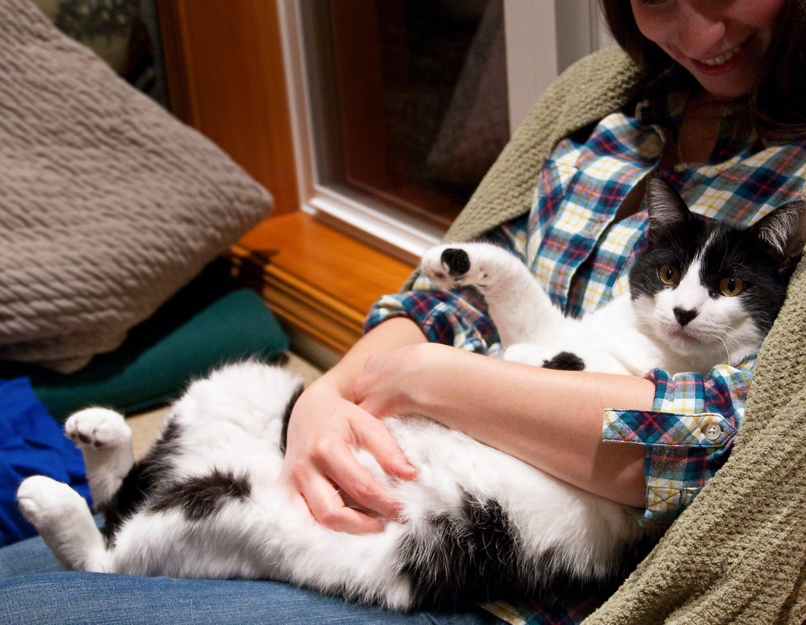 Узнают ли кошки своих хозяев после разлуки? - psychbook.ru