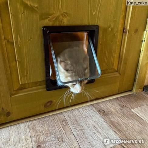Двери для кошки в двери – 3 вида проходов для питомца