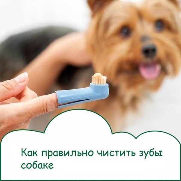 Чистка зубов собаке – выбор подходящего средства, правила чистки, особенности ультразвуковой процедуры - квартира, дом, дача - медиаплатформа миртесен