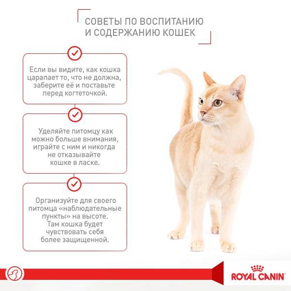15 причин завести кота
