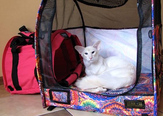 Кошка в машине: как безопасно перевезти животное