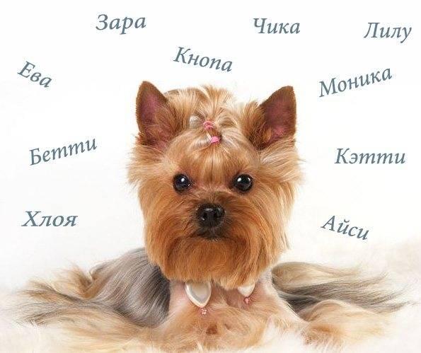 Обзор русских кличек для собак