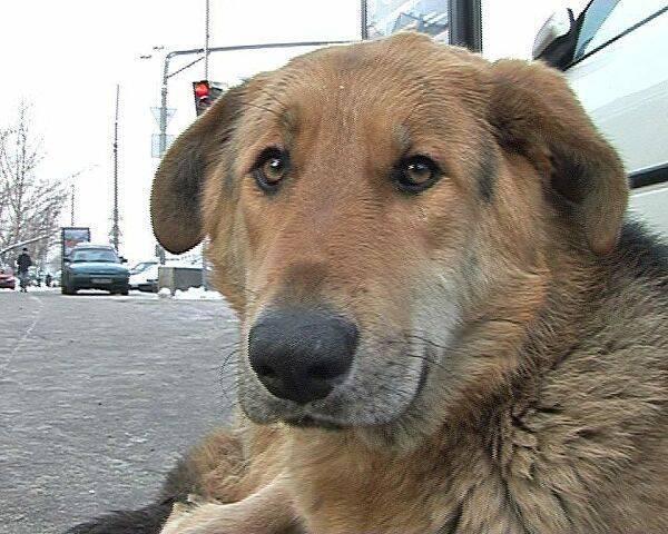 «не оставляй меня на даче!»: как помочь брошенной собаке или кошке | милосердие.ru