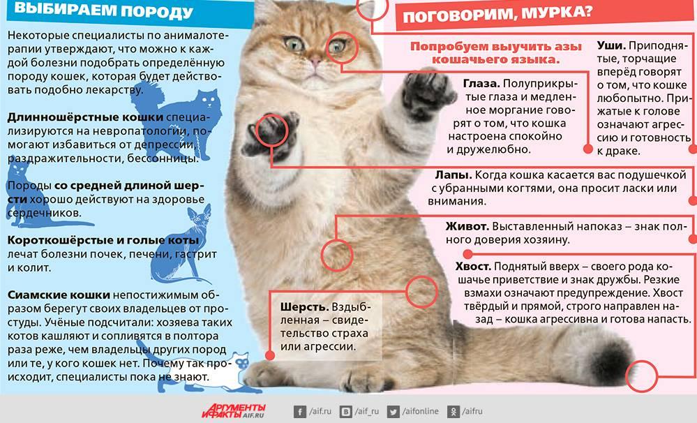 Вязка кошек: сроки полового созревания и правила случки животных