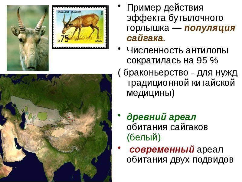 Китайский горный кот — уникальный, исчезающий вид