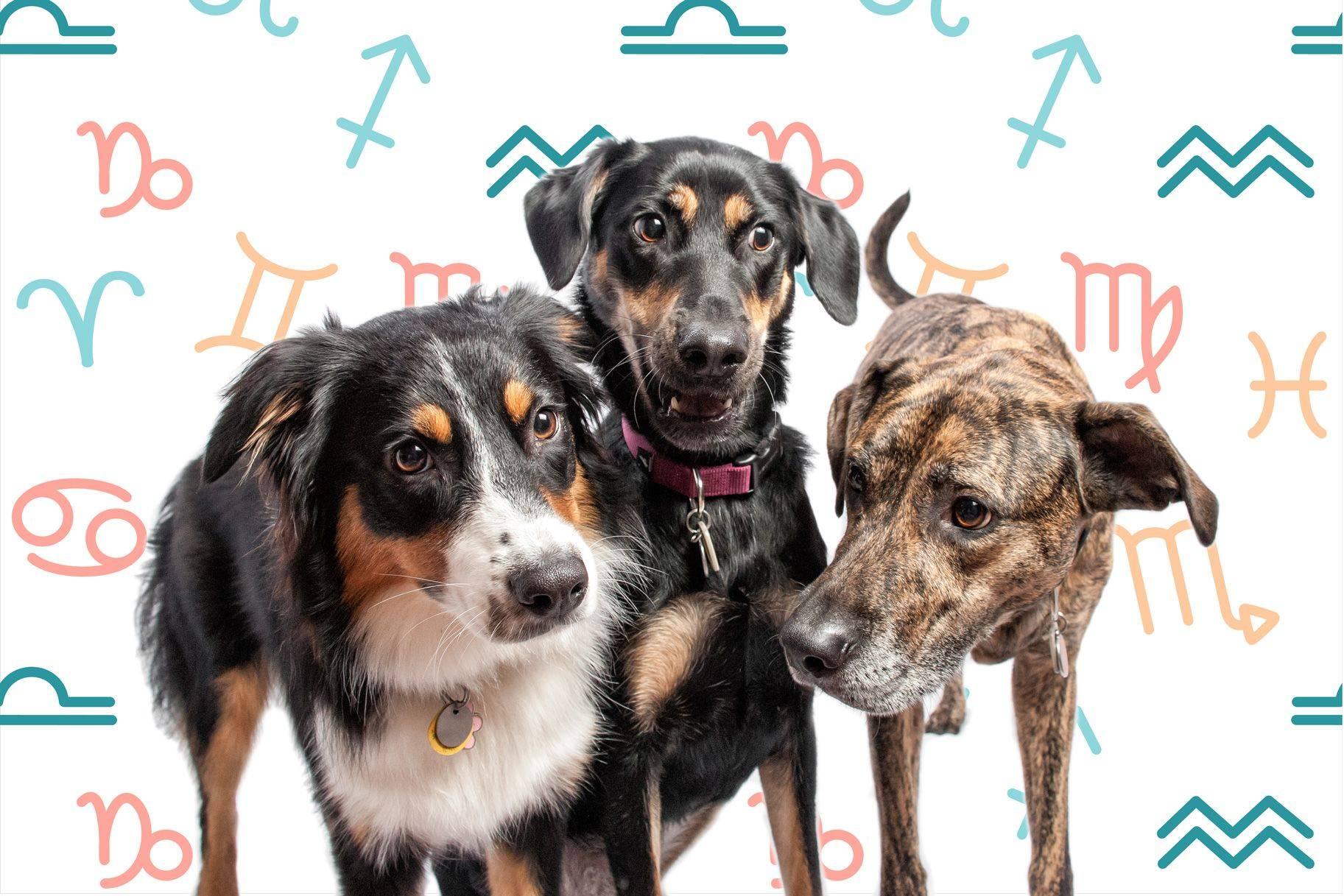 Какую собаку выбрать по знаку зодиака: подходящие породы