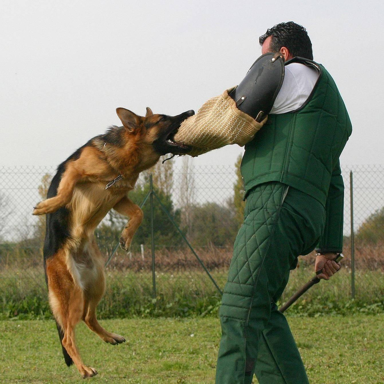 Курс угс, или управляемая городская собака