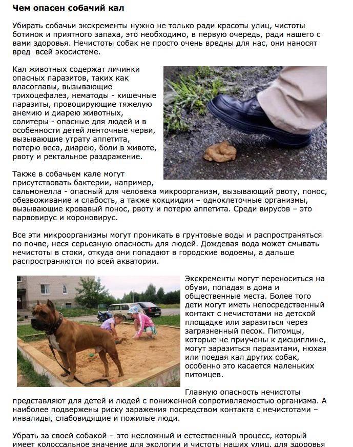 Копрофагия: почему собака ест экскременты и что делать | dogkind.ru