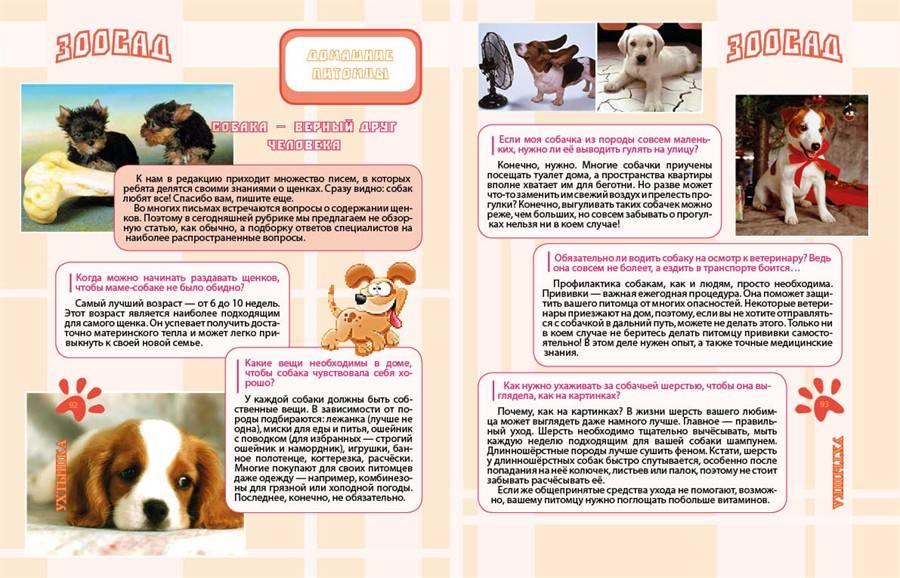 Фурминатор для собак: как пользоваться и вычесывание, фото и цена, принцип действия и чем отличаются для кошек