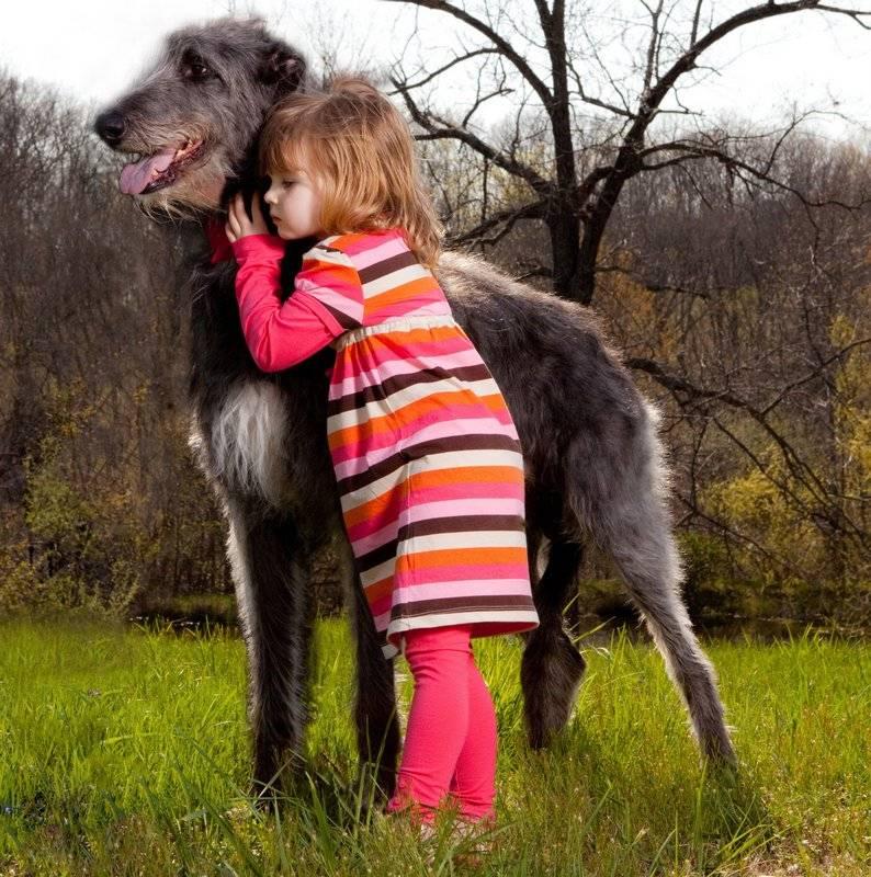 Собаки необычных пород – особенности и стандарты