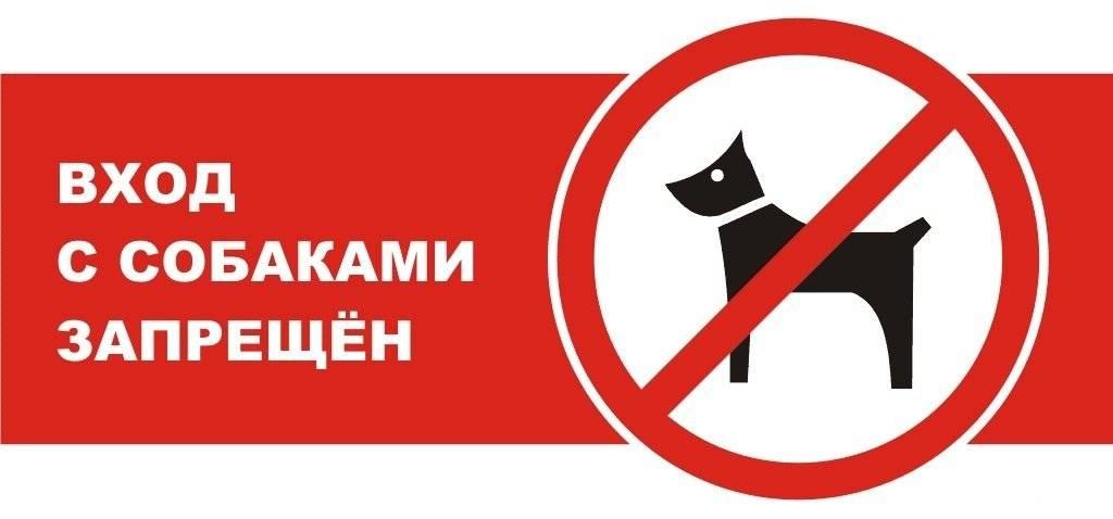 Куда можно и нельзя заходить с собаками по закону
