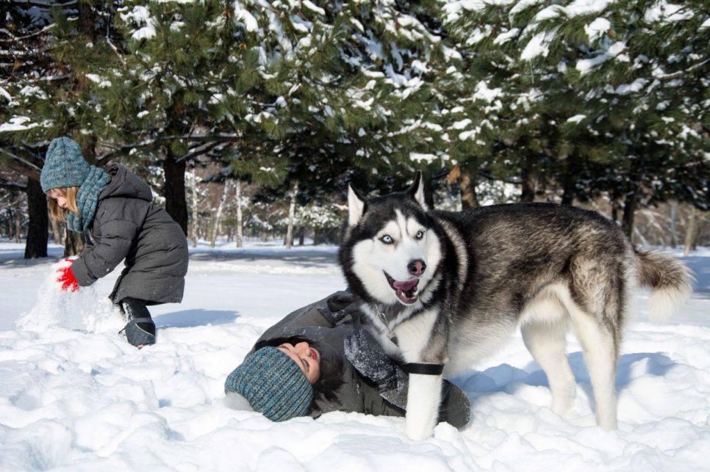 Топовая четверка пород кошек, которые готовы к суровым зимам и экстремальным холодам | pets2.me | яндекс дзен