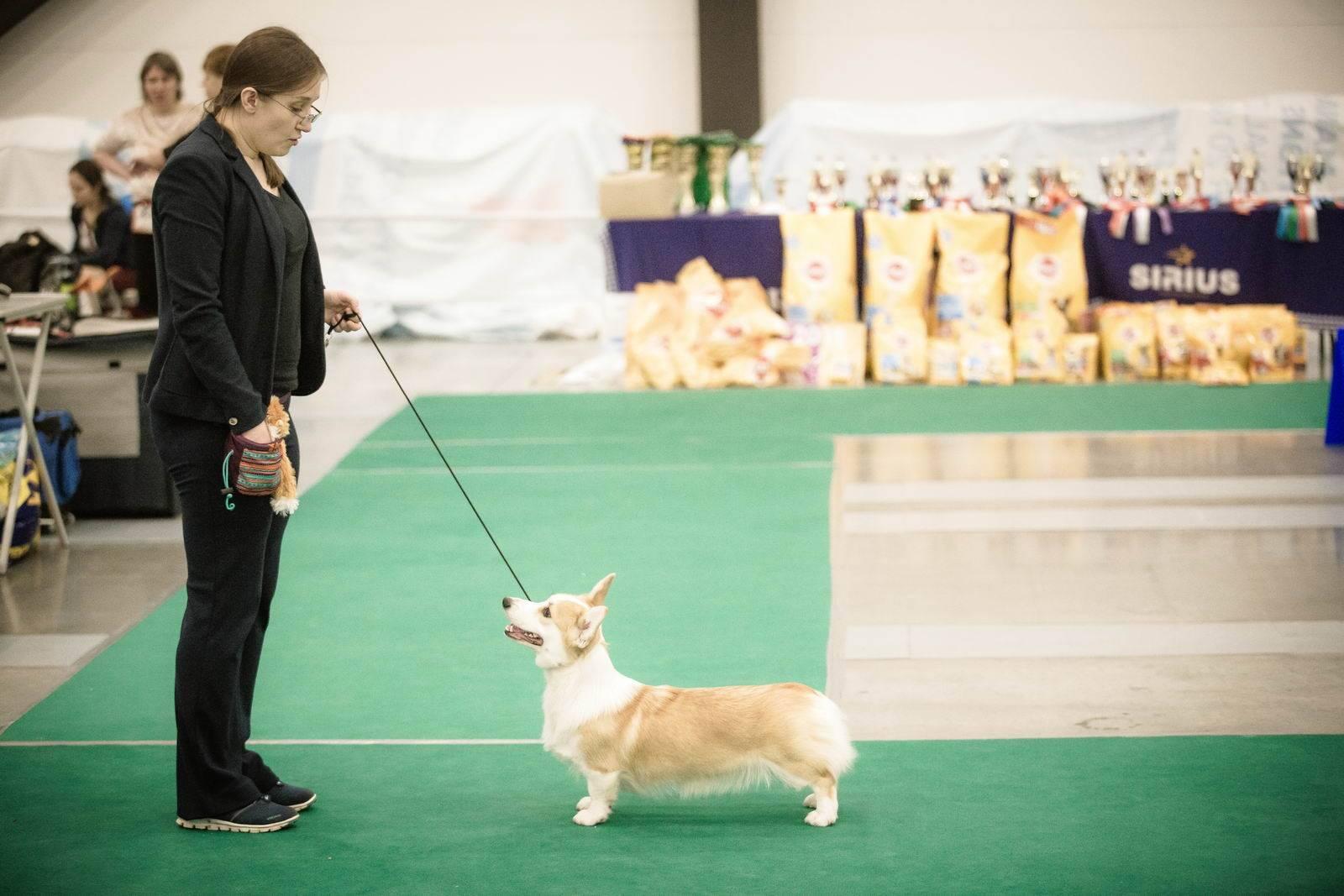 Для чего нужны ринговки для собак: какие существуют виды, как выбрать