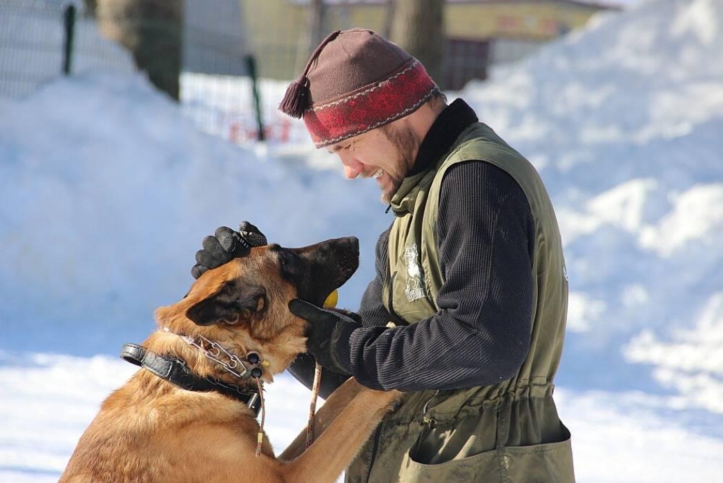Собака и посторонний человек, отношение собаки к чужим