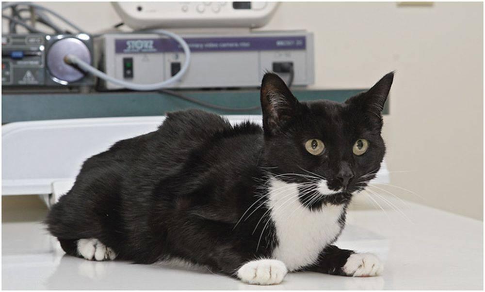 Коронавирус кошек. как распознать заболевание   животные   общество   аиф челябинск