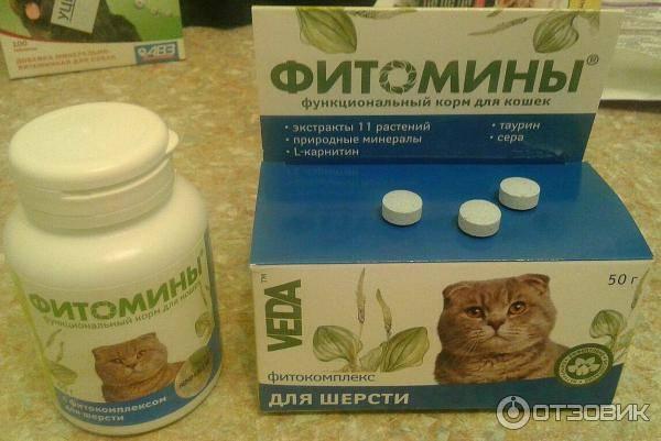 Витамины для кошек: какие выбрать