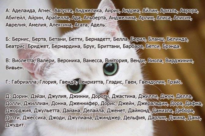 Редкие клички для кошек и котов