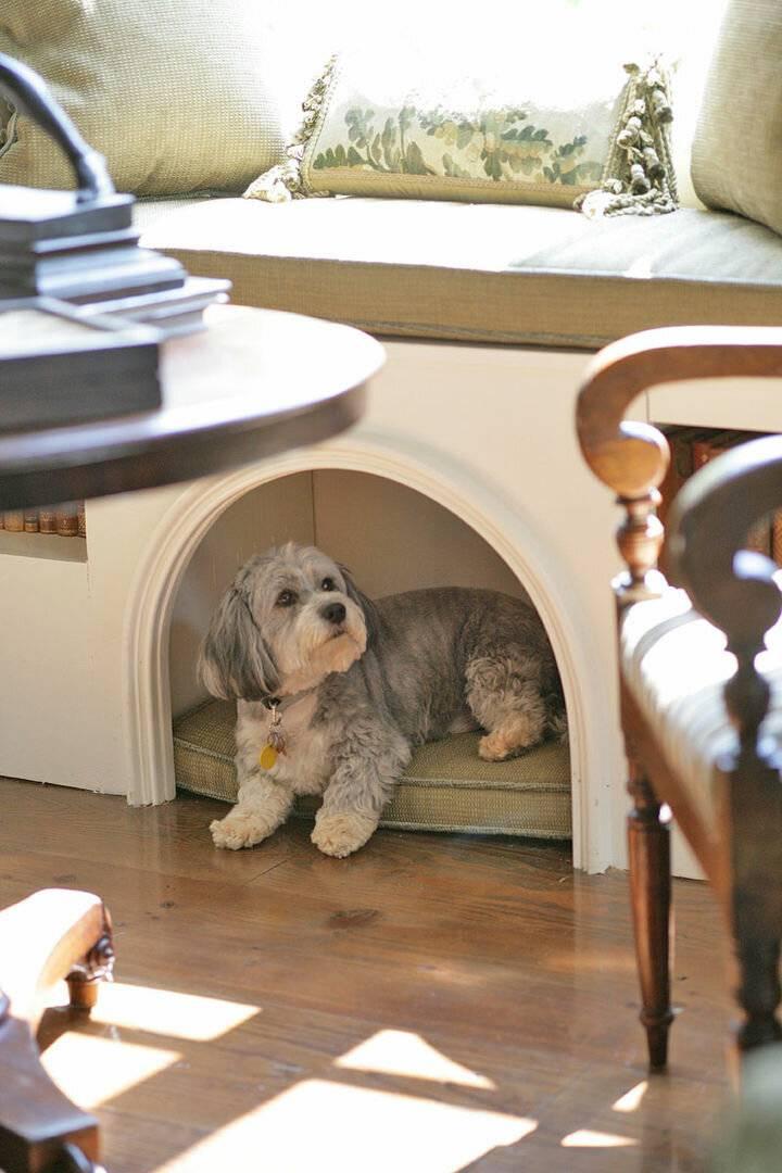 Собаки для квартиры: породы которые лучше завести