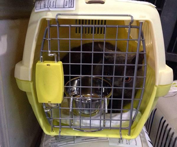 Перевозка собак в самолете по россии