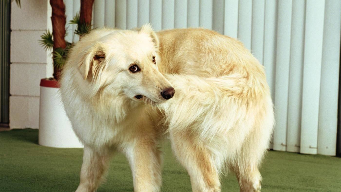 Почему собака грызет свой хвост? причины и методы корректировки поведения