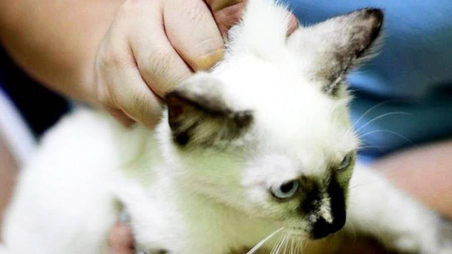 Где находится у кошки и кота холка, фото и описание