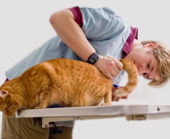 Заболевания мочеполовой системы у кошек и котов