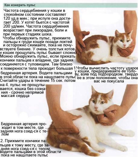 Котенок дергается во сне норма или судороги. почему кот дрожит когда лежит, как будто ему холодно и он мёрзнет. нарушения центральной нервной системы