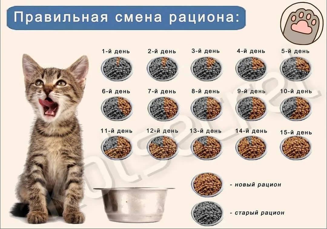 Как часто кот должен какать - oozoo.ru