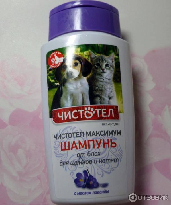 Как выбрать подходящий шампунь для кошек и котят