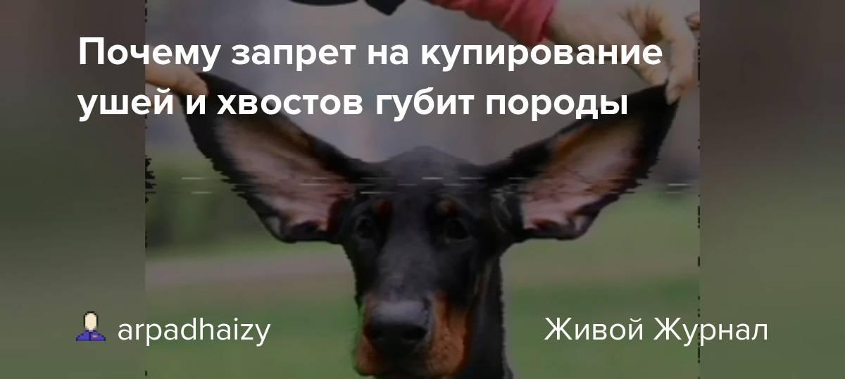 Купирование ушей и хвоста у собак: каким породам показано купирование? до какого возраста можно его проводить?