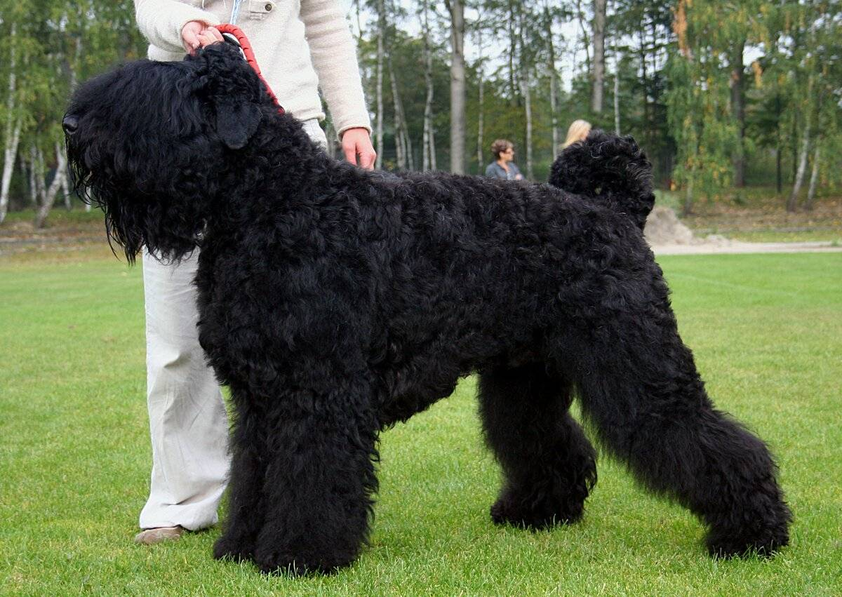 Охотничьи породы собак — фото, названия, описание