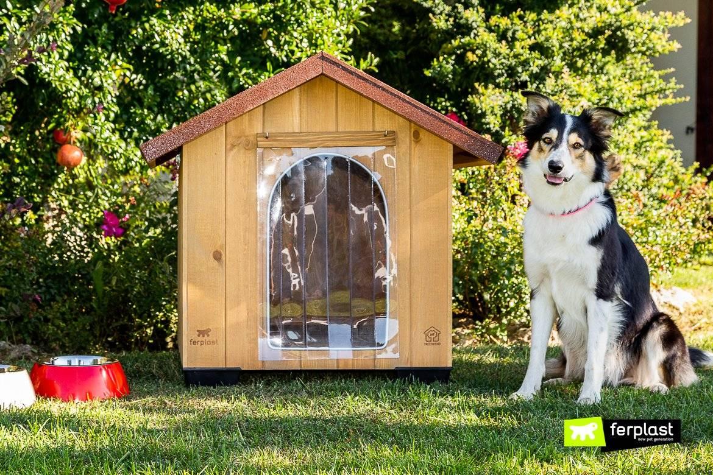 Как приучить собаку из квартиры жить во дворе: важные моменты