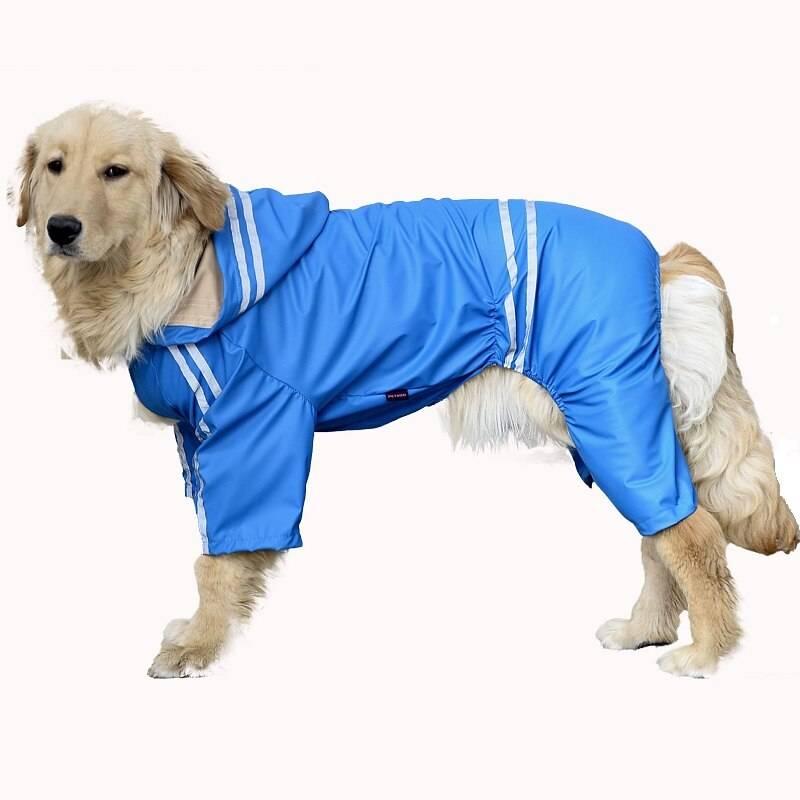 Практичный дождевик для собак мелких пород: попона, комбинезон, плащ