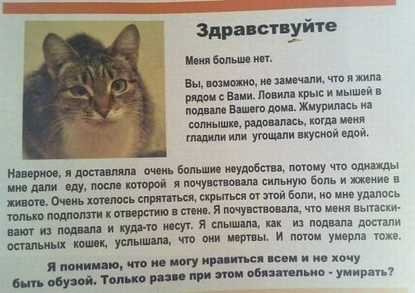 Кот плачет: кошачьи эмоции, причины слез, что делать