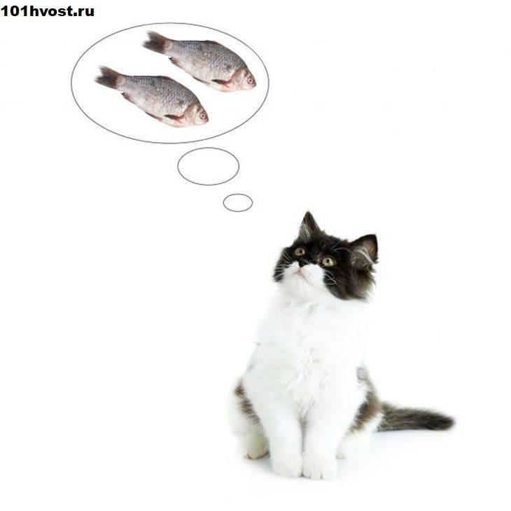 Можно ли кормить кошку рыбой: сырой, вяленой
