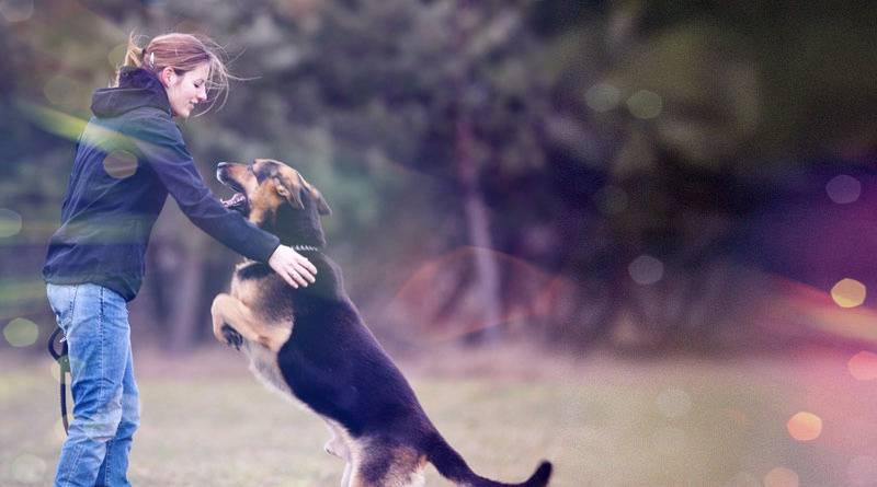 Если собака прыгает на гостей, ее можно отучить: как правильно это сделать