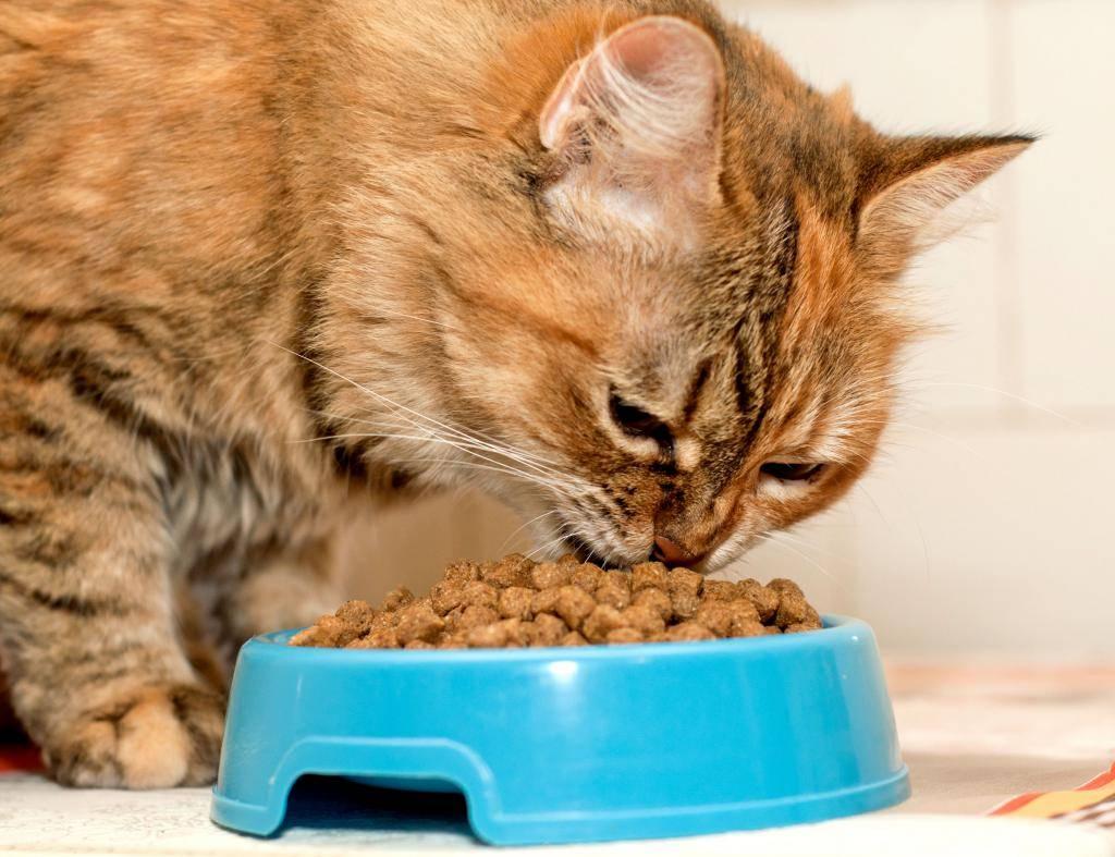 Правильное питание кошек - рекомендации ветеринарного врача