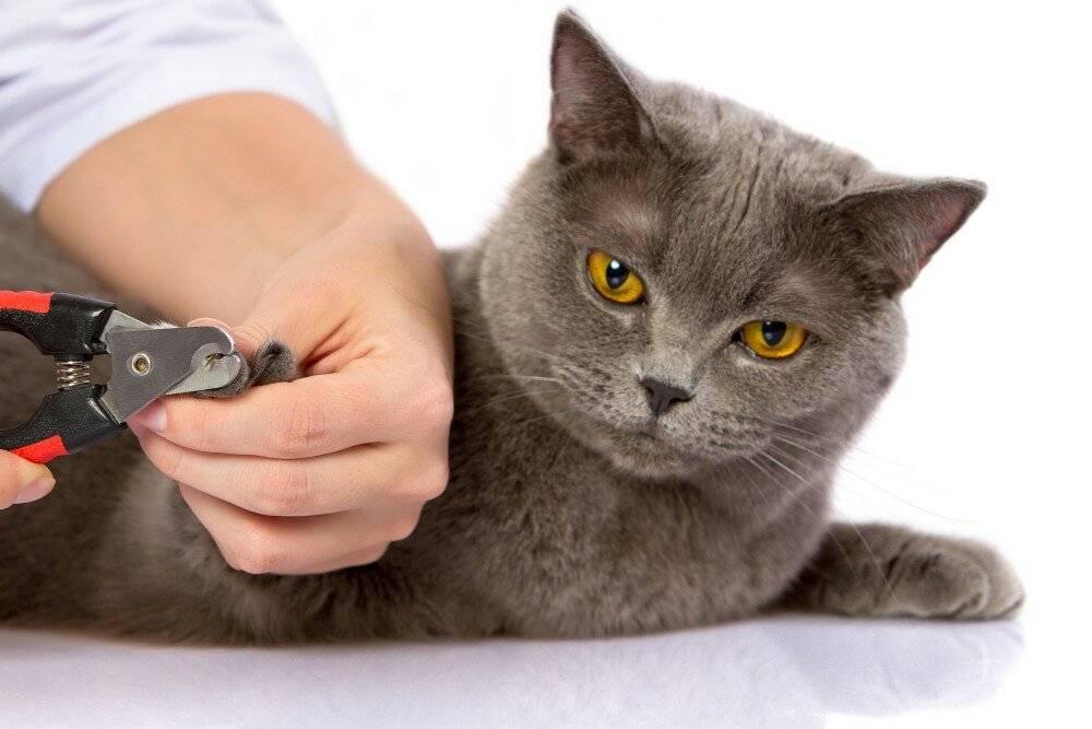Как подстричь когти кошке и котенку правильно в домашних условиях