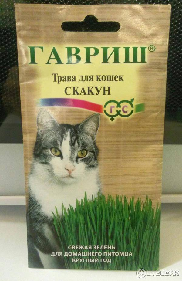Трава для кошек - название, как сажать дома, какую выбрать, какую любят, фото
